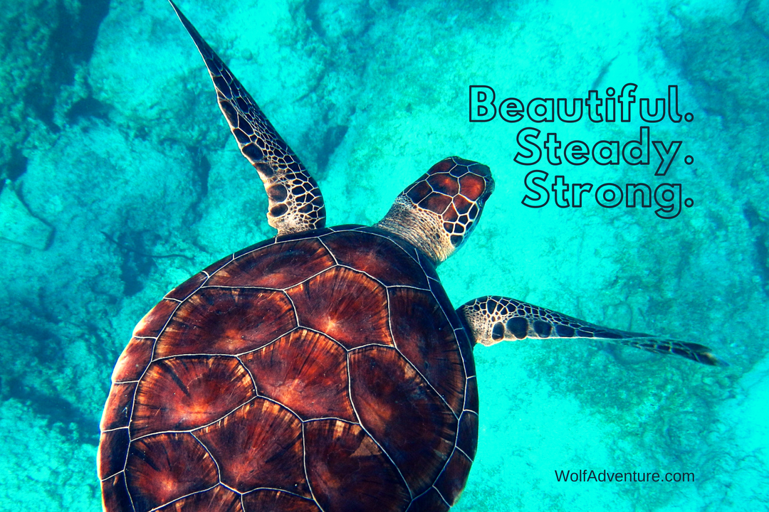 Wolf-Adventure-Image-Strong-SeaTurtle